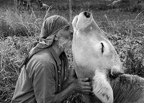 Kissing a cow